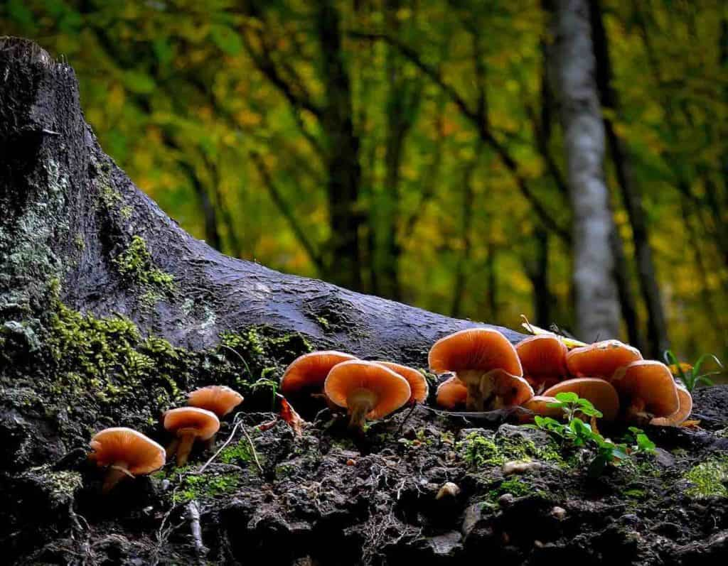 Image: Mushrooms in a forest - Mendo Insider Tours