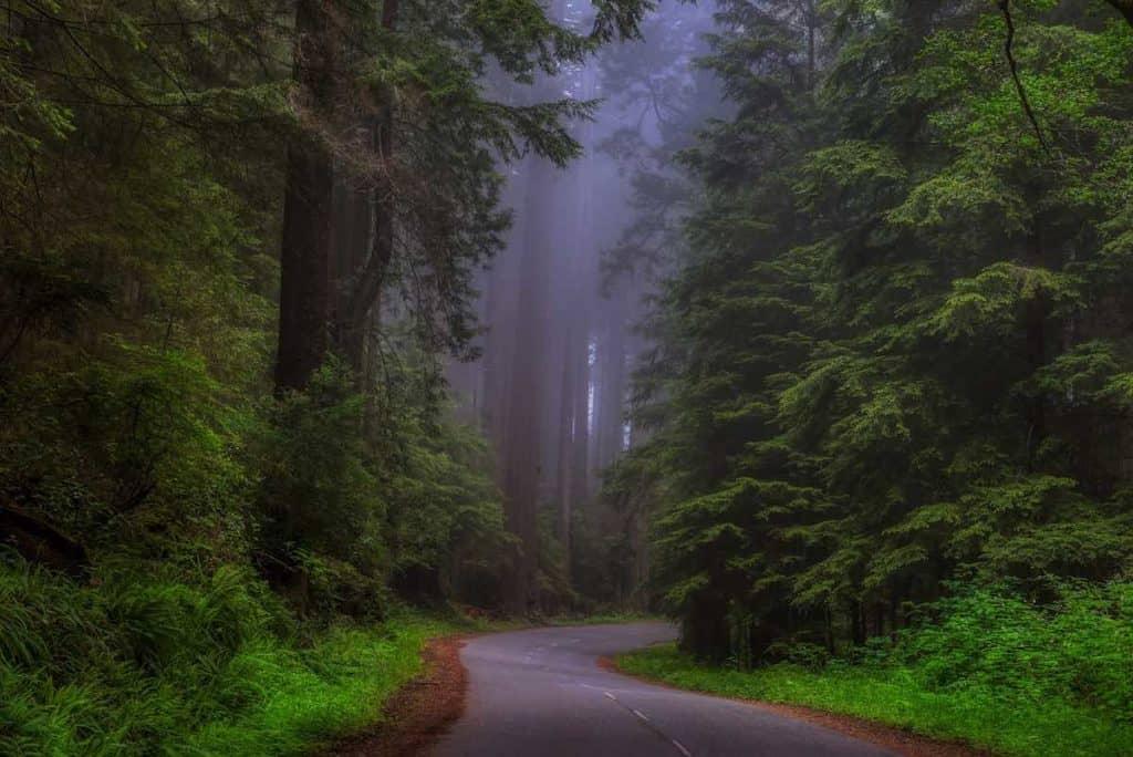 Image: Redwood forest road - Mendo Insider Tours